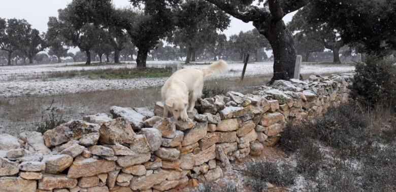 Nieve cuatro calzadas, filomena Salamanca