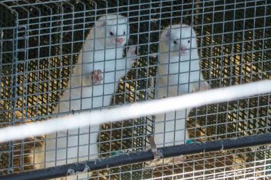 visones avila coronavirus ical