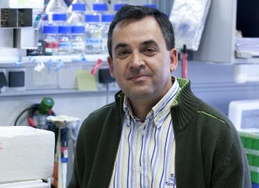 Isidro Sánchez-García, investigador del Ibsal.