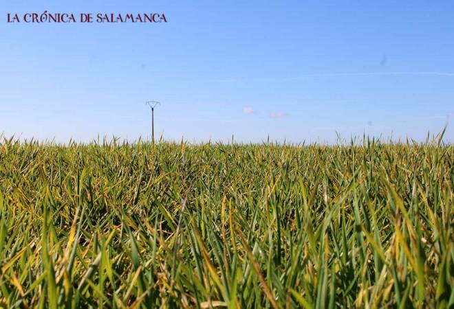 Cereales Salamanca