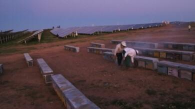 colmenas iberdrola planta fotovoltaica
