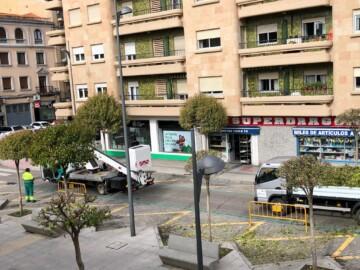 El Ayuntamiento de Salamanca procede a poder árboles en plena primavera.