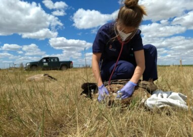 buitres envenenados veterinaria junta