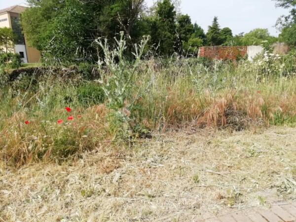 Los vecinos de Tejares se quejan del abandono de las zonas verdes de su barrio.