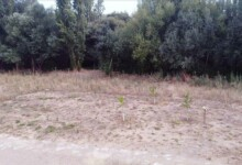 bosque sanitarios