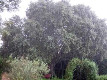 tormenta verano 25 agosto (3)
