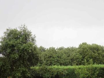 tormenta verano 25 agosto (4)