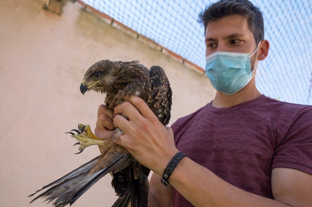 centro recuperacion fauna 3 formigo ical