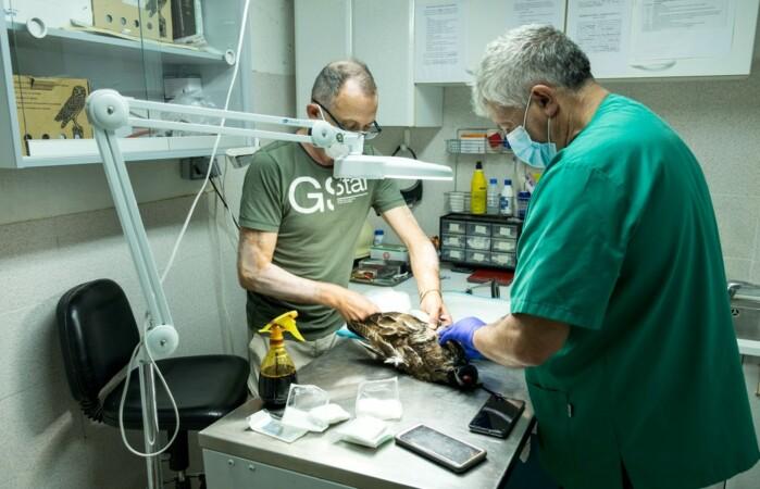 centro recuperacion fauna formigo ical