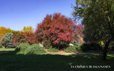 El otoño se refleja en los árboles de la Aldehuela.
